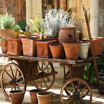 Tuscan Herb (type)
