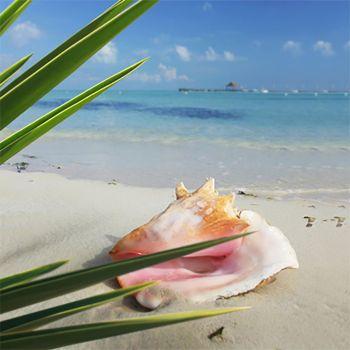 White Nectarine & Pink Coral