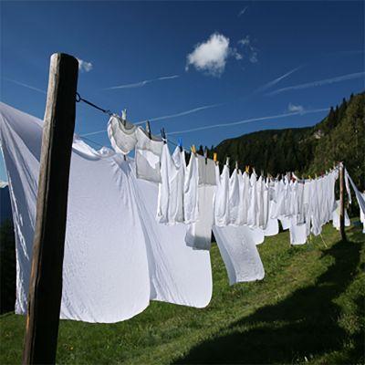 Clean Cotton (type)