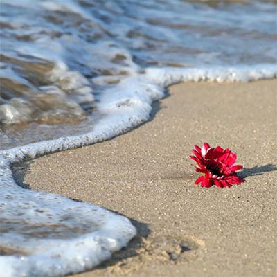 Sea Petals